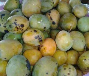blacky-mango